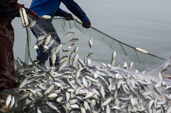 Commercial Fishing Netting